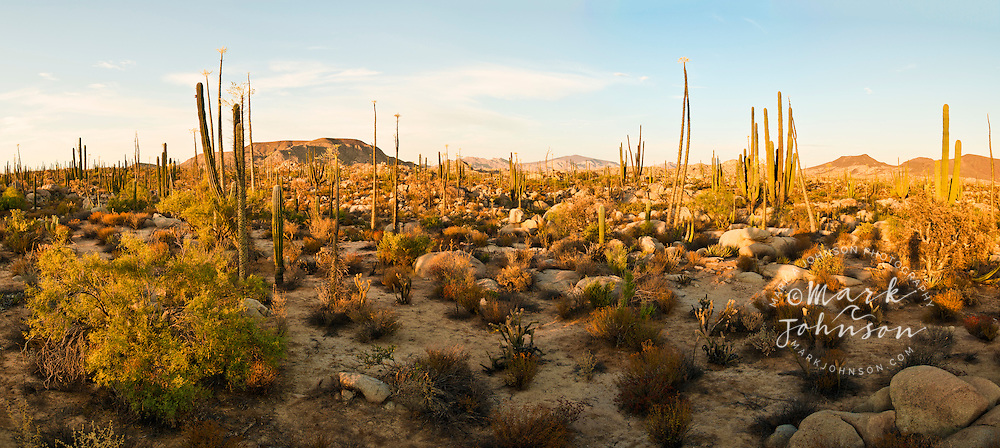Gorgeous Sonoran Desert scenery, near Cataviña, Baja California, Mexico
