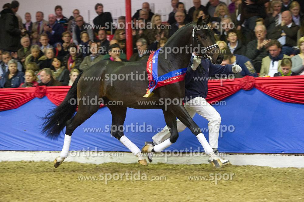 19.11.2011, Auktionszentrum, Vechta, GER, Oldenburger Hengsttage Auktion, im Bild Fuer 750.000 € ging der Dressur Siegerhengst aus dem Gestuet Lewitz, Paul Schockemohle in die Schweiz, das Pferd wird demnaechst im Dressurleisutngszentgrum Lodbergen untergerbachtz um seine Ausbildung fortzusetzen. EXPA Pictures © 2011, PhotoCredit: EXPA/ nph/ Kokenge..***** ATTENTION - OUT OF GER, CRO *****