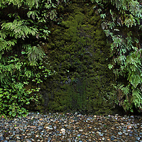 A wall covered in ferns, moss, and dripping water. Fern Canyon is a canyon in the Prairie Creek Redwoods State Park in Humboldt County, California, USA. It was one of the shooting locations of the movie Jurassic Park 2: The Lost World.