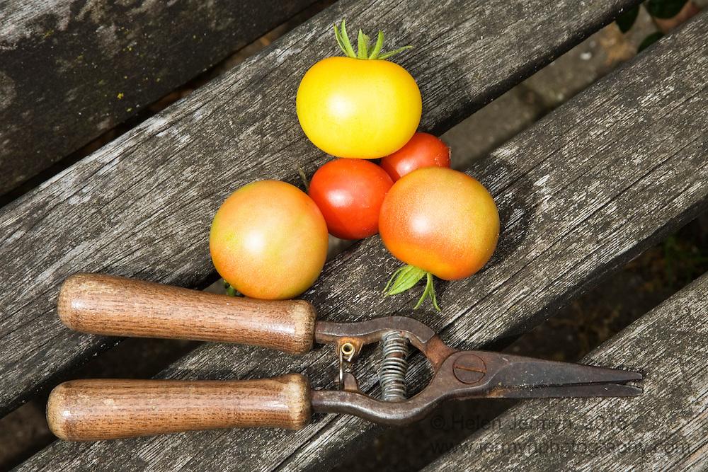 Thrive garden, Battersea