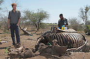 Prince Harry Views Dead Rhino At Kruger Park