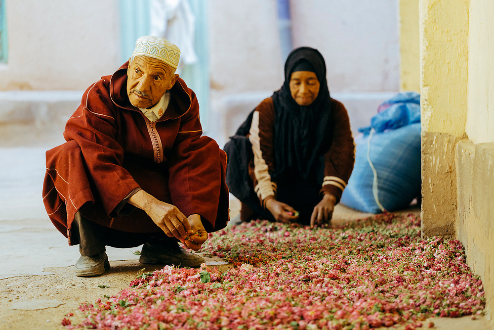 KELAAT M'GOUNA, MOROCCO - 14TH MAY 2016 - Rose farmers sort through the harvested rose flowers at their family home in Kelaat M'Gouna, Dades Valley - also known as the 'valley of roses' - Southern Morocco.