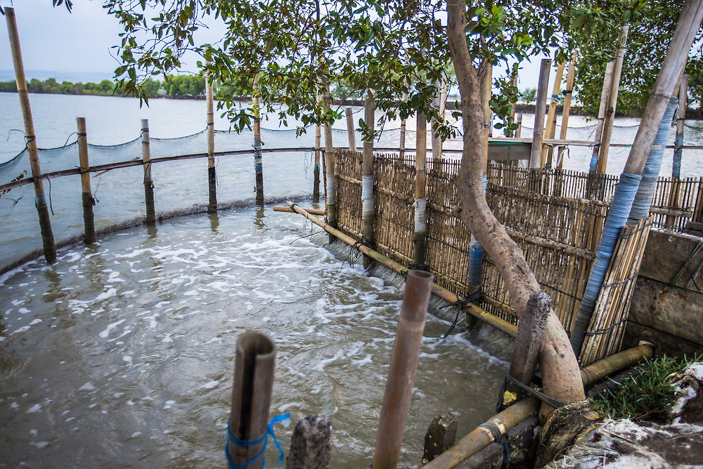 CAPTION: A small shrimp farm in Tapak, which is also affected when floods occur. LOCATION: Tapak, Semarang, Indonesia. INDIVIDUAL(S) PHOTOGRAPHED: N/A.