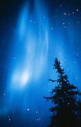 Alaska. Aurora Borealis with lone tree.