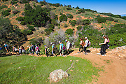 Large group of hikers on the Pelican Bay trail, Santa Cruz Island, Channel Islands National Park, California USA