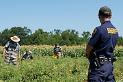 Inmates from the Smith County Jail tend a garden in Tyler, Texas on July 12, 2013. The garden is nearly 5 acres and has produced more than 150,000 pounds of fresh produce for needy East Texans since 2010 (Cooper Neill / for The Texas Tribune)