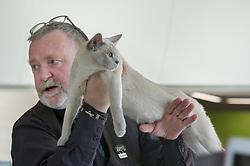 Christchurch 38th Regional Annual Burmese Cat Club Show Images Setford News Photo Agency