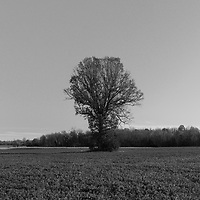 http://Duncan.co/lone-tree-in-a-field