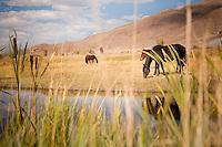 Reno, Nevada.  Wild horses