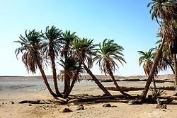 A small oasis in the Moroccan Sahara Desert<br /> <br /> (c) Andrew Wilson   Edinburgh Elite media