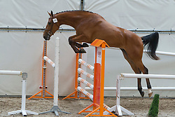 84 - Dreamer<br /> KWPN Paardendagen 2011 - Ermelo 2011<br /> © Dirk Caremans