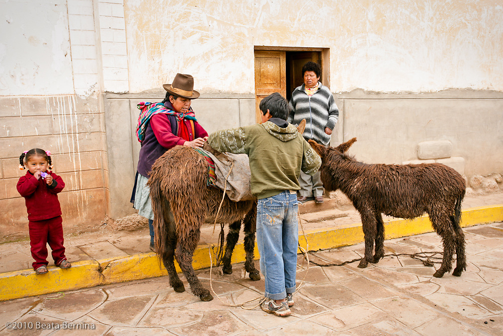 A family loading donkeys for the market, Chinchero, Peru.