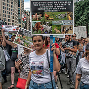 Supporters turned out in droves in support of the Animal Rights March. Numerous organizations and speakers also shared inspiring messages in support of animal rights. Campaigners called the march &ldquo;a consolidated global effort to make the vegan voice heard.&rdquo; It&rsquo;s estimated that in New York City alone, roughly 2,300 people took to the streets.<br /> <br /> Animals are mutilated, confined to tiny cages, and violently slaughtered so that humans can eat them; electrocuted, strangled, and skinned alive so that humans can parade around in their coats; burned, blinded, poisoned, and cut up alive in laboratories; enslaved, beaten, and kept in chains to make them perform tricks for humans&rsquo; amusement; and worse.<br /> <br /> Stand in Solidarity With Animals Every Day by Going Vegan