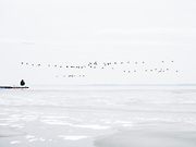 Canadian Geese fly over frozen water in the Chesapeake Bay in Maryland on Dec. 30, 2017. With sea level rise, habitat for migrating birds is eroding and causing the migratory pattens to change.