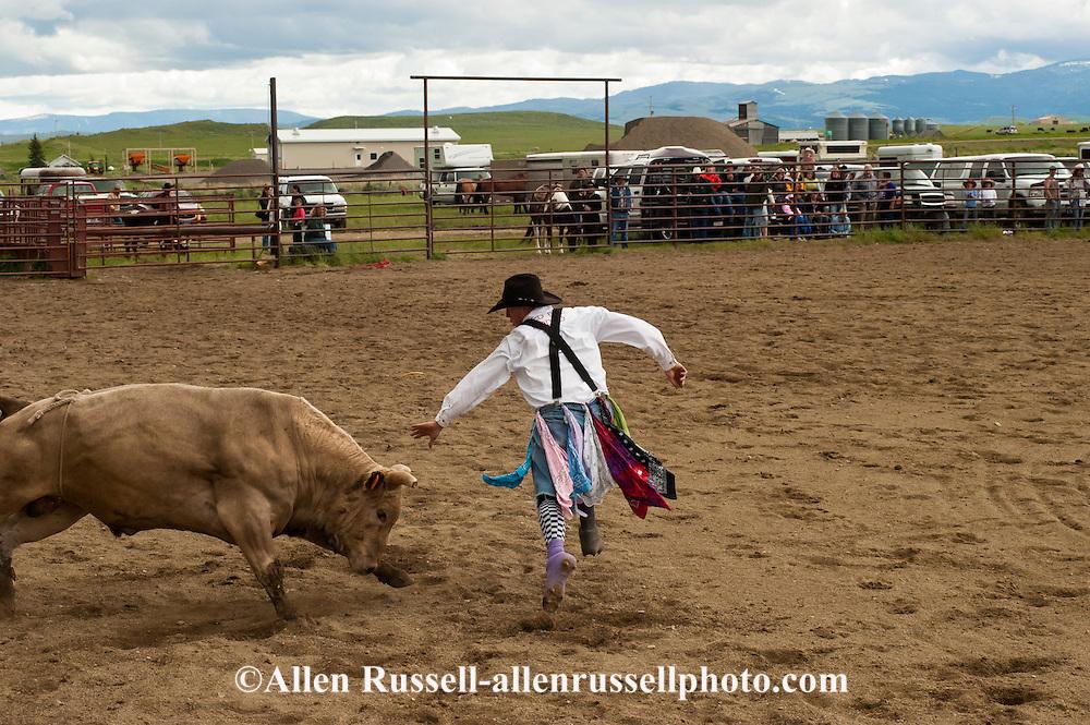 Bull Fighters, Wilsall Rodeo, Montana
