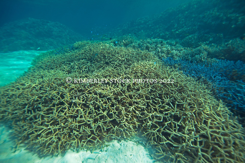 Large areas of bleached coral in Clerke Lagoon at the Rowley Shoals.