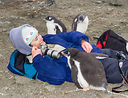 "A curious Gentoo Penguin  (Pygoscelis papua) chick inspects a tourist on Aicho Island, Antarctica. ""Don't approach penguins closer than 15 feet,"" says an Antarctic tourism rule in 2005. But if you lie down on the ground more than 15 feet away, a curious Gentoo Penguin chick may approach you. An adult Gentoo Penguin has a bright orange-red bill and a wide white stripe extending across the top of its head. Chicks have grey backs with white fronts. Of all penguins, Gentoos have the most prominent tail, which sweeps from side to side as they waddle on land, hence the scientific name Pygoscelis, ""rump-tailed."" As the the third largest species of penguin, adult Gentoos reach 51 to 90 cm (20-36 in) high. They are the fastest underwater swimming penguin, reaching speeds of 36 km per hour. For licensing options, please inquire."