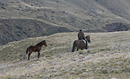Gaucho in Sierra Baguales, a remote area near Torres del Paine national park, Patagonia, Chile