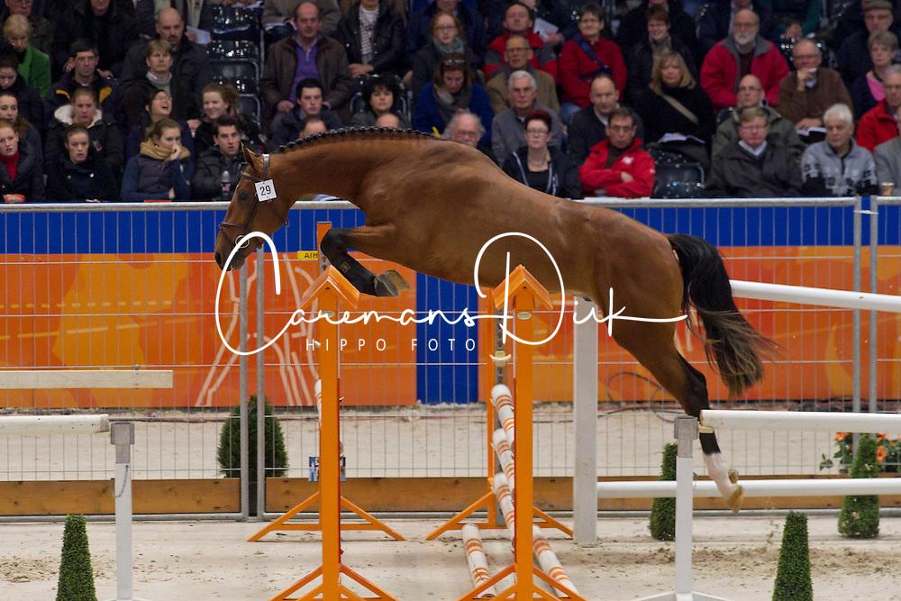 029 - Elvaro<br /> KWPN Hengstenkeuring - 's Hertogenbosch 2012<br /> © Dirk Caremans