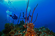 Couple Diving, Grand Cayman, East Wall