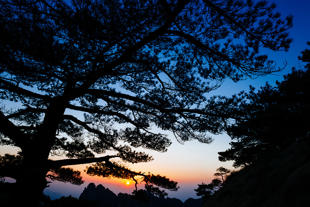 Fir trees and granite spires are silhouetted against a hazy atmosphere in Huang Shan China.