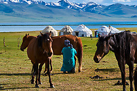 Kirghizistan, province de Naryn, le lac de Song Kol, campements de yourte des nomades Kirghiz, traite des jument // Kyrgyzstan, Naryn province, Song Kol lake, Kirghiz nomad's yurt camp, milking mare