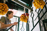 """NAPLES, ITALY - 13 JULY 2017: Piennolo tomatoes from Mount Vesuvius hang in """"Da Agostino"""", a grocery store in Naples, Italy, on July 13th 2017."""