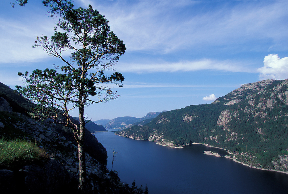 Europe, Norway. Small, weathered pine tree clings to cliffs over Idsefjord near Jorpeland, Norway