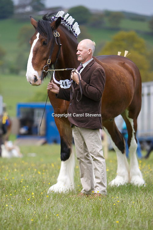 Messrs B &amp; D Lowrie  Bay Gelding  f  2006  Upperfoot Sir Selwyn<br /> Sire - Harwood's Commander<br /> Dam - Lancashire Lady Second