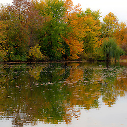 Reflections of fall colors on a pond in Erlanger, Kentucky. (Christina Paolucci, photogrpaher).