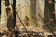 Nederland, Groesbeek, 17-12-2017Een fietser rijdt op zijn mountainbike door de bossen in het Rijk van Nijmegen.Foto: Flip Franssen