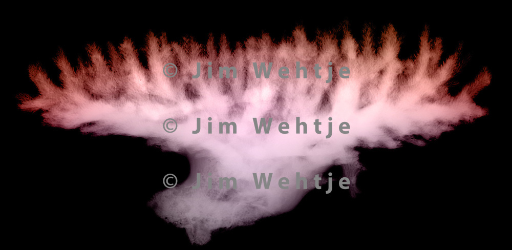 X-ray image of table coral (side view, orange on black) by Jim Wehtje, specialist in x-ray art and design images.