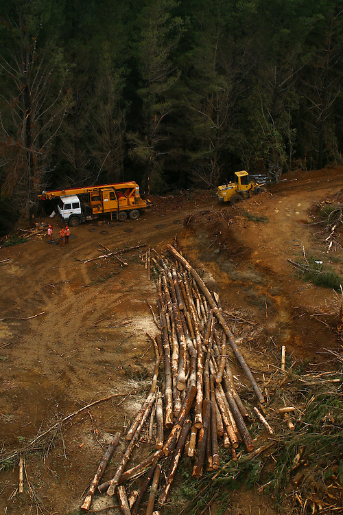 Aerial view of a logging operation in the sector of Cordillera Costa-Lebu, Chile, Feb. 16, 2004. Daniel Beltra/Greenpeace.