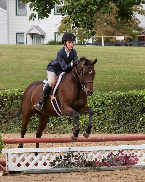 Image from the September 17, 2016 Elmington Hunter Horse Show