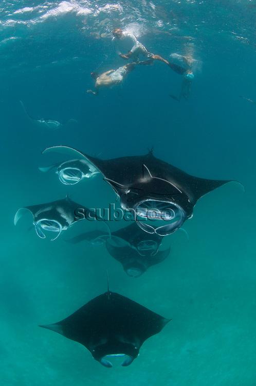 Tourists watching several Manta Rays, Manta birostris, feeding in formation, Baa Atoll, Maldives