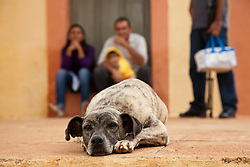 Cachorro triste na porta de uma igreja / Sad dog at the door of a church in Pernambuco, Brazil.