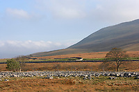 Ingleborough, Yorkshire Lower slopes with limestone pavement in early autumn