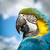 Portret Papagaai