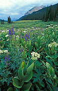 Gothic Mountain, wildflowers, Crested Butte, Colorado