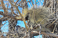 Porcupine in Tree