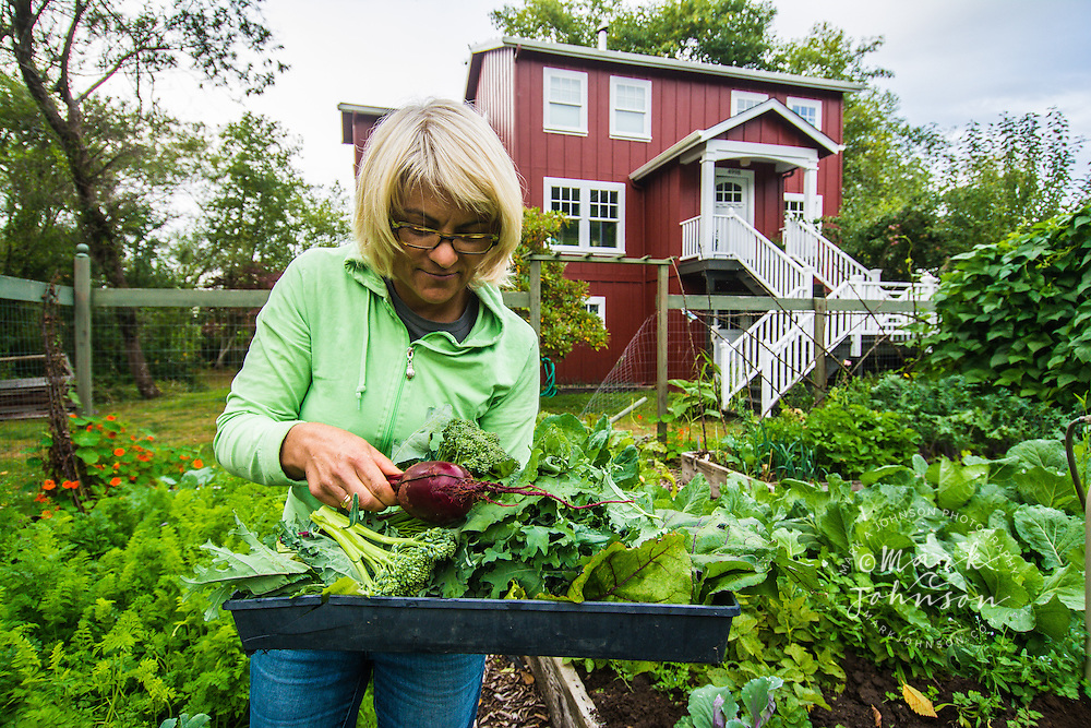 Woman harvesting vegetables from her garden, Astoria, Oregon, USA