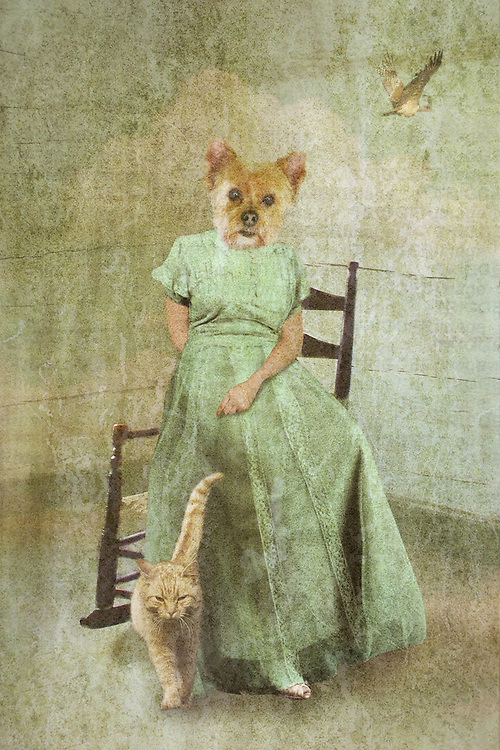 dog dressed as female, sitting in a chair, fantasy art