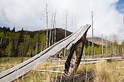 Obadiah Reid stands in a meadow, framed by a fallen tree trunk, along the Hankins Pass Trail, Lost Creek Wilderness, Colorado.