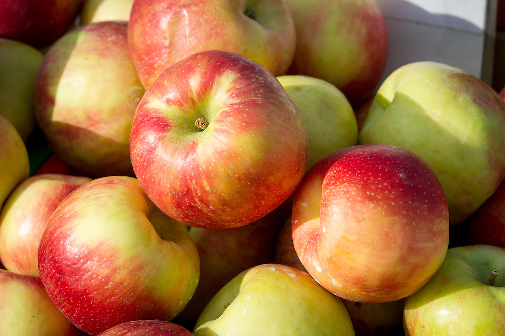 Close-up of apples at the Waverly Farmers Market in Baltimore, Maryland
