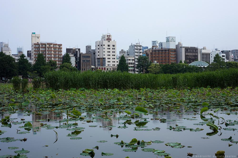 Lake in Ueno park in Tokyo
