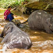 THA/Chiang Mai/20160725 - Vakantie Thailand 2016, Elephant Nature Park