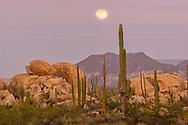 Full moon over Cardon and Cirio Cactus with Boulder Rocks near Catavinia, Baja California, Mexico