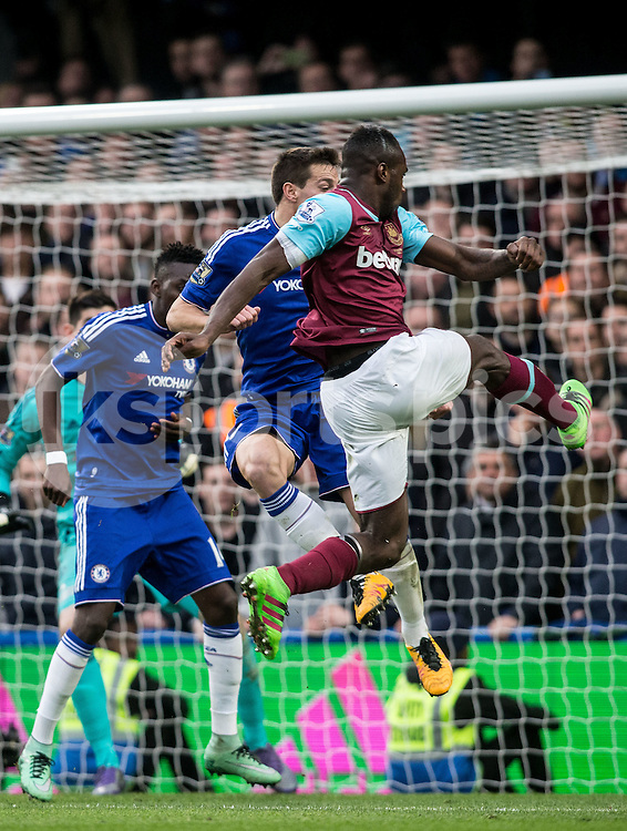Michail Antonio of West Ham United tries to shoot following a penalty late int he second half during the Barclays Premier League match between Chelsea and West Ham United at Stamford Bridge, London, England on 19 March 2016. Photo by Steve Ball.