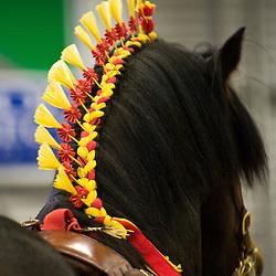 Shire Horse Spring Show 2010