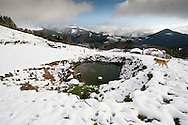 A Basque shepherd dog approaches a farm's pond to drink some water in a snowed hill in the Northern Spanish Basque village of Okondo, on December 2010. Photo Rafa Rivas in a snowed hill in the Northern Spanish Basque village of Okondo, on December 2010. Photo Rafa Rivas